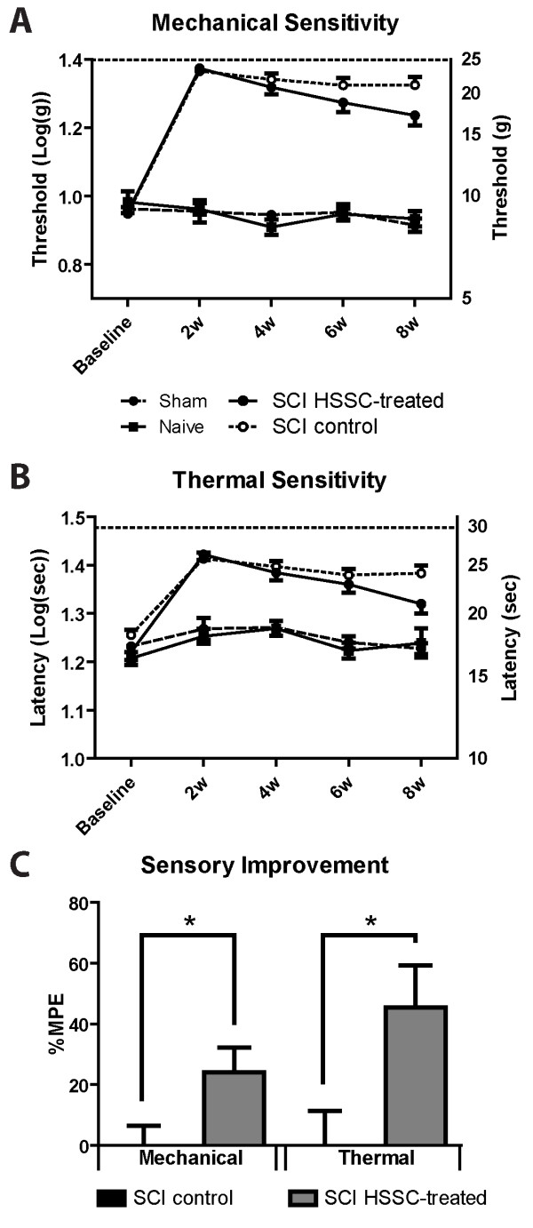 Amelioration of hypoesthesia in SCI-HSSC-grafted animals. Baseline and biweekly assessments of perceptive thresholds for (A) mechanical and (B) thermal stimuli, applied below the level of injury, showed a trend towards progressive recovery in SCI-HSSC-grafted animals. C: When expressed as percentages of the maximal possible effect for mechanical and thermal perceptive thresholds improvements, SCI-HSSC-treated animals showed significant improvements in sensory function for both mechanical and thermal components. (A-C: data expressed as mean ± SEM; A-B: repeated measures ANOVAs; C: Student t-tests). ANOVA, analysis of variance; HSSC, human fetal spinal cord-derived neural stem cells; SCI, spinal cord injury; SEM, standard error of the mean.