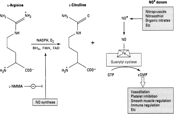 Nitric oxide synthesis