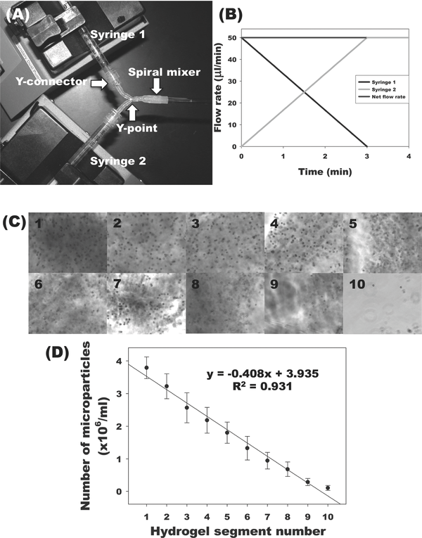 Fabrication of microparticle-based gradient alginate hydrogels. (A) Photograph of gradient making system. (B) Flow rates of two syringes to pump a linear gradient for a 5 cm length × 2 mm diameter alginate hydrogel. After linear gradient pumping for 3 min, an additional 50 μL of alginate solution, which is the volume from the Y point to the beginning of quartz tube, was further pumped into a spiral mixer for 1 min. (C) Photomicrographs of microparticles in cross-sections of gradient alginate hydrogel segments. Segments 1-10 represent sequential segments of the gel. (D) Quantification of microparticles in each segment of gradient alginate hydrogels.