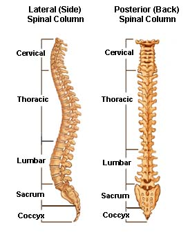 Lumbar and Cervical