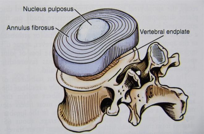 Intervertebral structure
