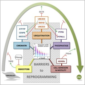 Barriers to reprogramming