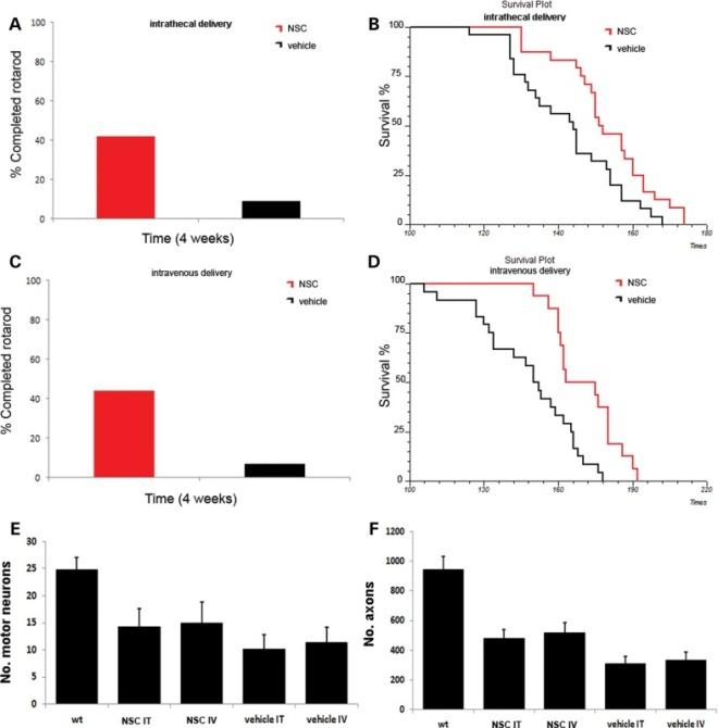 Transplantation of ALDHhiSSCloVLA4+ NSCs improves neuromuscular function, increases survival and reduces motor neuron and axon loss in ALS mice. (A and C) Transplantation of NSCs significantly improved motor performance in SOD1 mice, as demonstrated by the rotarod test both in the intrathecally transplanted group (A) and in systemically injected mice (C) (4 weeks after transplantation, P < 0.001, ANOVA). (B and D) Kaplan–Meier survival curves for mutant SOD1 mice treated intrathecally (B) or systemically (D) with ALDHhiSSCloVLA4+ NSCs or with vehicle. Survival was significantly extended for NSC-transplanted mice compared with vehicle-treated mice for both treatment groups (P < 0.05, log-rank test). (E) The motor neuron count (n = 6 for each group) in the lumbar spinal cord of NSC-transplanted, vehicle-treated SOD1 mice and wild-type mice (data represent the mean ± SD of the number of motor neurons per section) at 140 days of age. The evaluation revealed significantly increased numbers of surviving motor neurons in treated SOD1G93A mice (P < 0.001, ANOVA). (F) Quantification of axons (data represent the mean ± SD) at 140 days of age (n = 6 for each group) demonstrated that transplanted SOD1G93A mice showed a significantly increased number of axons (P < 0.001, ANOVA).