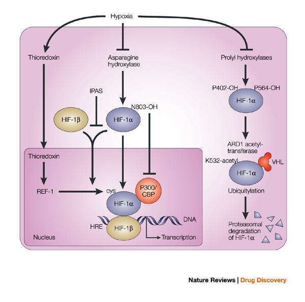 Nature Drug Review Phase  Approval Keytruda Keynote