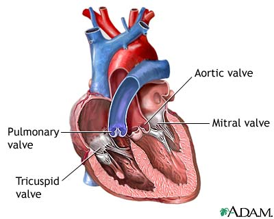 Mitral Valve Prolapse Cure Naturally