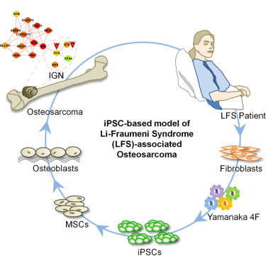LFS iPSCs for stem cell production