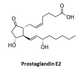 prostaglandin_e2
