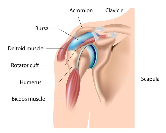 shoulder-joint