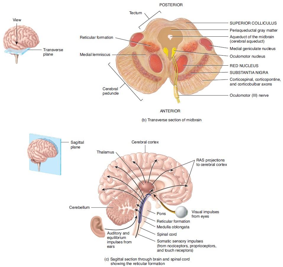 midbrain dopaminergic neurons – Beyond the Dish